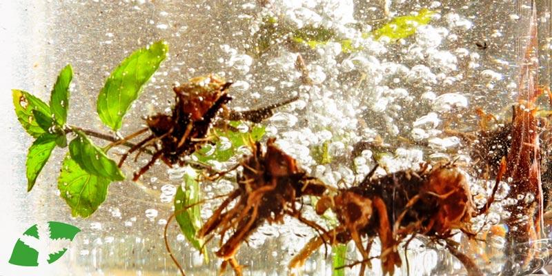 Waldviertler Kräuter