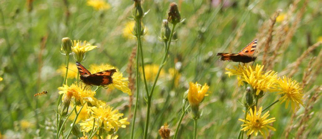 Kräuterpadagogin Eunike Grahofer entdeckt mit Ihnen die heimische Flora und Fauna
