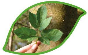 engagiert sich für die Bewahrung des Pflanzenwissens, der Ethnobotanik