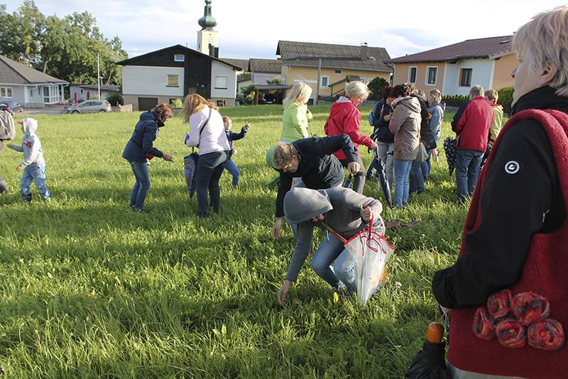 Gruppenteilnehmer beim Sammeln der Sommerkraeuter